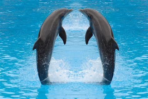 dolphin duo werner janssen