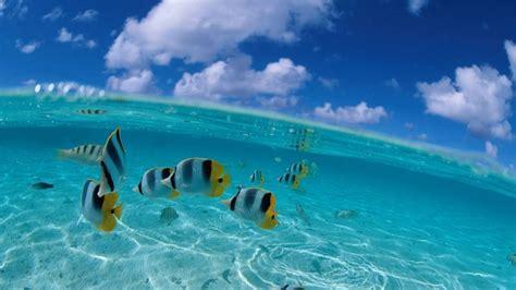 peces en el mar  hd fondoswikicom