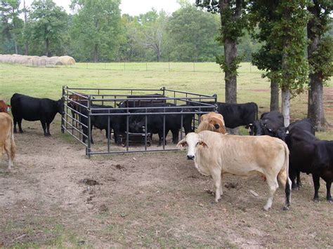 Livestock Feeder by Bunk Feeders W Drop In Liners