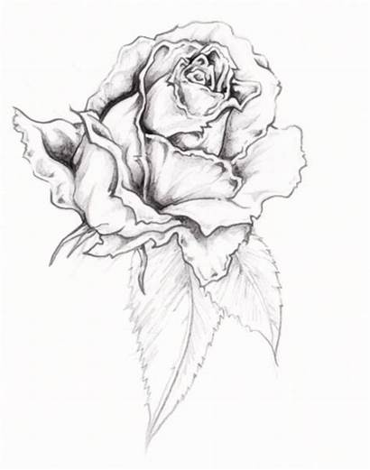 Rose Tattoo Tattoos Traditional Designs Printable Roses