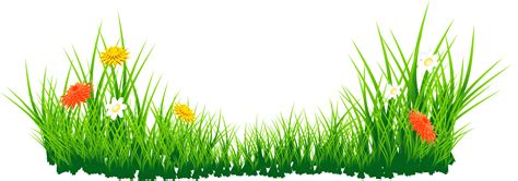 Daisies Clipart Patch Grass