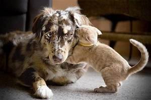 Calin chaton - Chat et chien sur Chat-Mignon.com