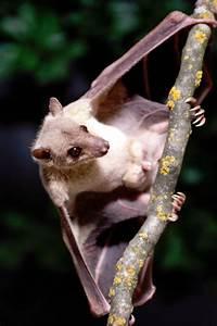 17 Best images about Animals BATS on Pinterest | Little ...