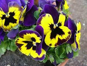 Aktuelle Blumen Im April : garten bilder fr hlings blumen april 2010 weltpolitik und gartenzwerge ~ Markanthonyermac.com Haus und Dekorationen