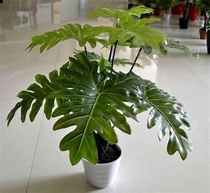 Piante finte on line - Piante Finte - Vendita piante
