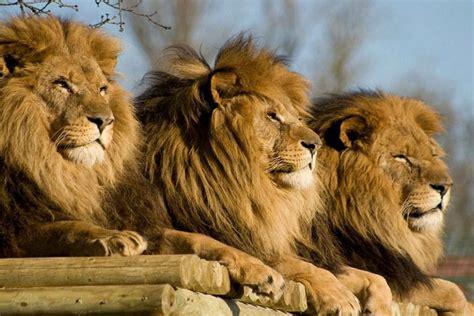 From Lion & Safari Park Half-Day Tour in Johannesburg   My ...
