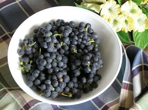 15 Different Types Of Grapes