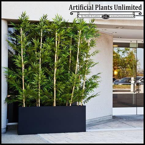 87 best images about screening plantings on