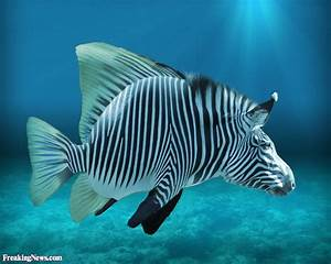Tropical Fish Pictures - Freaking News
