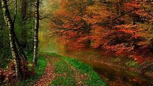 wallpaper, autumn, leaves, , trees, , forest, , autumn, , walk, path