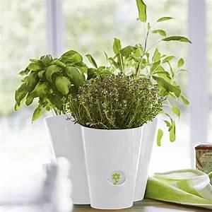 Herbes Aromatiques En Pot : des herbes fra ches port e de main pot herbes ~ Premium-room.com Idées de Décoration