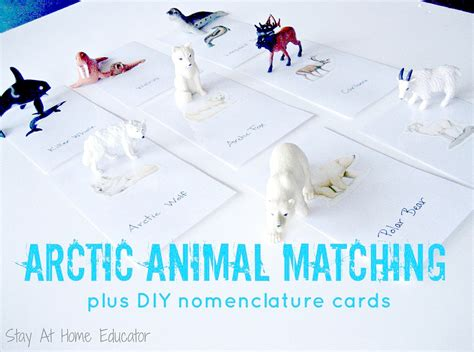 eight arctic themed preschool activities 857 | Arctic Animal Matching plus DIY nomenclature cards Stay At Home Educator 1000x744