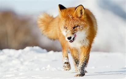 Animals Animal Wallpapers Nature Very