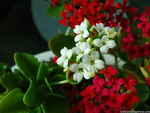 Desktop Wallpapers » Flowers Backgrounds » Red White ...