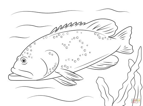 coloring grouper pages bluespotted drawing printable dot
