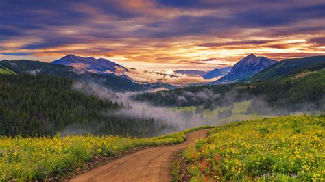 landscape nature wildflowers path mist forest trees