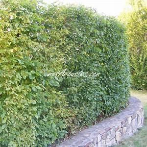 Quels Arbustes Pour Une Haie : quel arbre mettre pour une haie ~ Premium-room.com Idées de Décoration