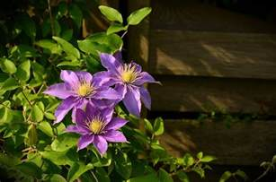 painting a small bathroom ideas when to prune clematis plants