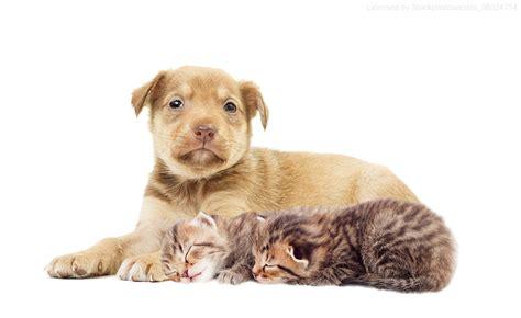 zeckenschutz fuer hunde katzen der tierprofi