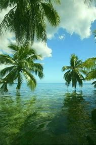 Tropical Paradise Beach Bahamas