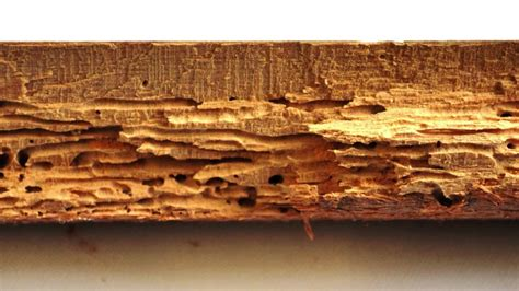woodworm problems  woodworm treatment