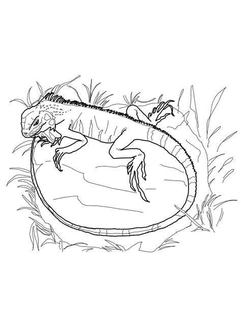 Printable Coloring Pages by Free Printable Iguana Coloring Pages For