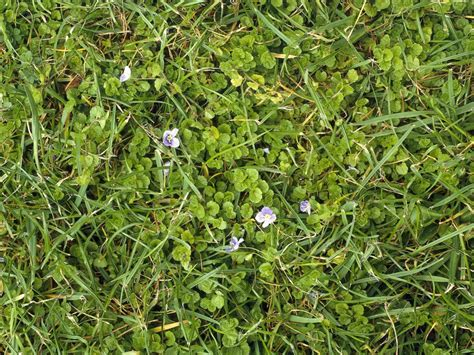 lawn weeds 12 common weeds that take over your lawn hgtv