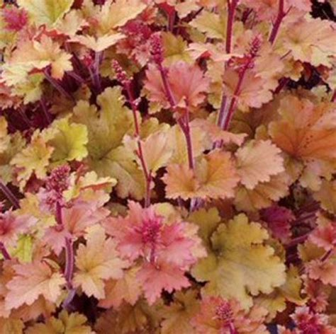 plants suitable for shade 49 best images about orange on pinterest best mid autumn sun and flowers ideas