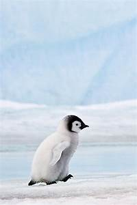 Classy Woman | Animals | Pinterest | Penguins, Emperor and ...