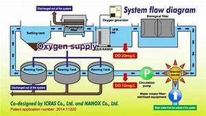 Design And Benefits Of Recirculating Aquaculture System