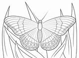 Butterfly Coloring Admiral Pages Printable Butterflies Super Colouring Crafts Supercoloring Printables Monarch источник Cartoons Animals Nature sketch template