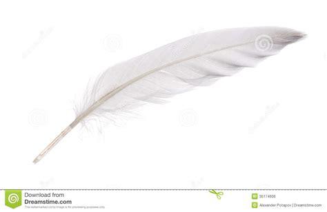 canap plume d oie plume blanche d 39 isolement d 39 oie image libre de droits