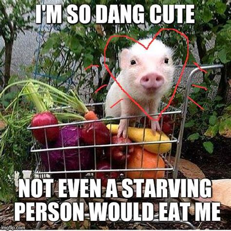 Pig Meme - baby pig please do not eat bacon imgflip