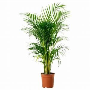 Piante da appartamento - Piante da interno - piante