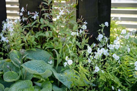 plants for facing gardens plants for a north facing border gardenersworld com