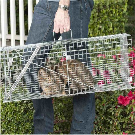 Trapping Feral Cats  The Best Way To Trap Stray Cats