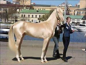 The Most Beautiful Horse in the World Does NOT Live in Turkey