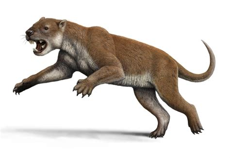elbows  extinct marsupial lion suggest unique hunting
