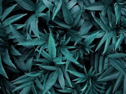 Pflanzen Pflanze Botanik Tter Drausen Manipulation Bearbeitet