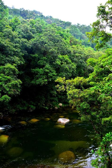 Daintree Rainforest Australia Queensland australia