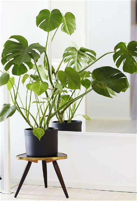 desk plants that don t need sunlight 28 4 plants that don t plants that don t die