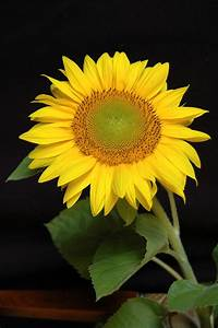 I Need New Things  Yellow Flower