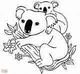 Koala Coloring Bear Pages Printable Drawing Cartoon Tasmanian Devil Koalas Tree Clipart Colouring Sheets Animal Getdrawings 1187 Unknown Unique Cool sketch template