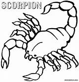 Coloring Scorpion Pages Scorpions Animal Popular sketch template