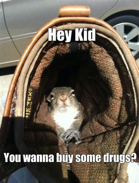 squirrel meme funny squirrel pictures