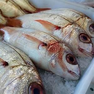 Comprar Pescado Fresco Online  Besugo Directo De Lonja