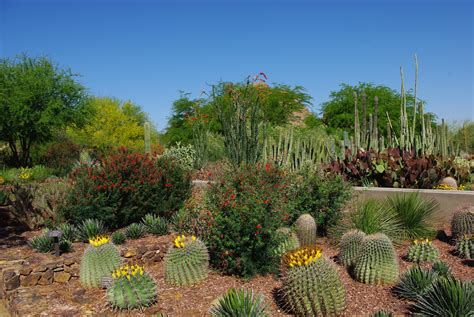 Desert Botanical Gardens In Phoenix by Arizona Destinations Scenic Areas In Arizona Page 2