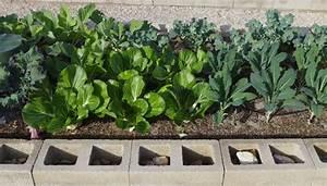 Desert Gardening: Ideas for Your First Veggie Garden