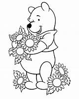 Sunflower Coloring Sunflowers Pages Pooh Drawing Printable Winnie Sheets Clipart Flower Google Adult Fall Flowers Adults Sheet Cartoon Outline Disney sketch template