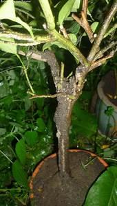 Anti Fourmi Naturel : fourmilli re dans un pot de fleur anti fourmis naturel ~ Carolinahurricanesstore.com Idées de Décoration